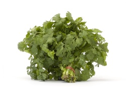 Cilantro Organic - 1 Bunch