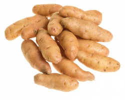 Potatoes, Fingerling (Burgessville) -1.5 lbs.