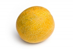 Melon, Galia (Aylmer) -each
